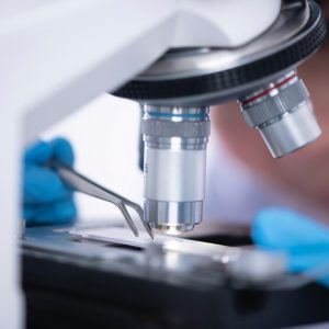 Microscopia y Montaje